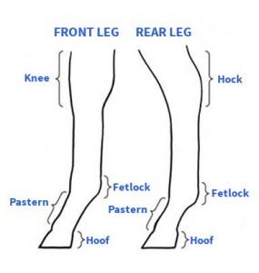 leg diagram rff