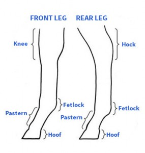 leg diagram rff