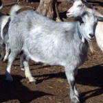 silverlg